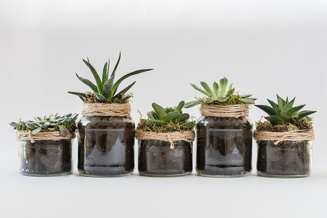 Plant Gifts